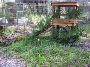 Do you see the Leopard Cat (Trick E) in this photo?