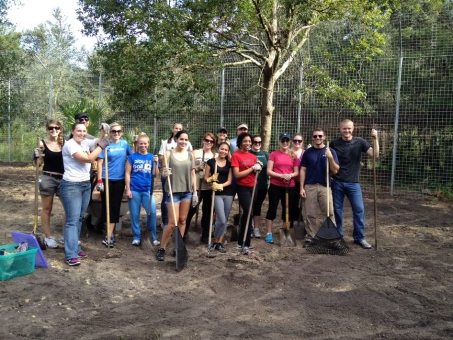 Stetson Law Students help get Nikita Lioness' new 3,000 sf room addition ready. Got a group who wants to get down and dirty for the big cats? Contact Edith.Parker@BigCatRescue.org and tell her you want to be an AdvoCat.