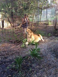 Gale and Nikita Lion