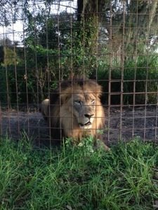 Joseph Lion would like more flea treats