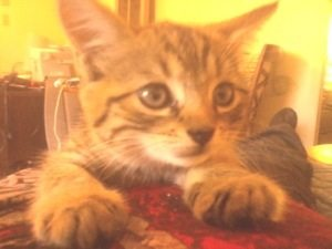 Bobcat rescue call we got today.  Not a bobcat.