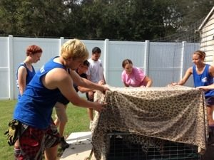 Jade the leopard gets weighed before seeing the vet
