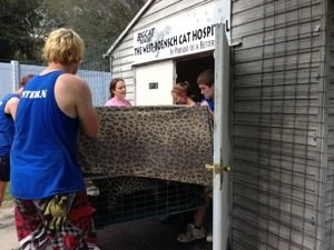 She is carried into the West Boensch on site Cat Hospital