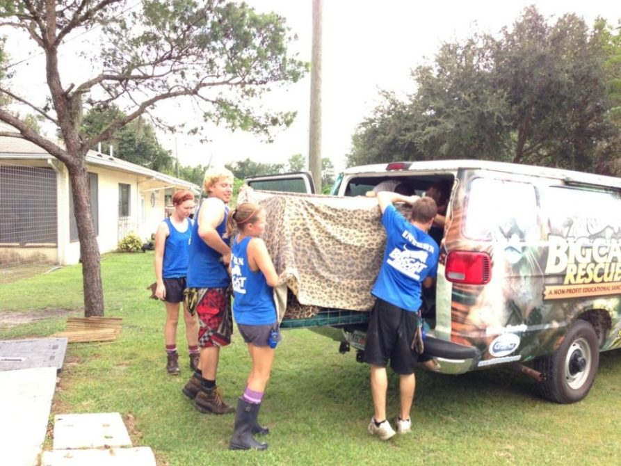 Volunteers left Jade Leopard into the van where Jamie and Dr Justin will drive her in to Ehrlich Animal Hospital