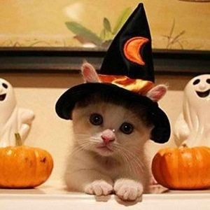 Be sure to keep your pets inside during Halloween