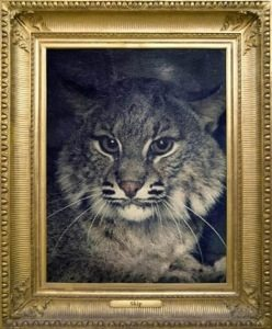 Everywhere around the world people are thinking of Skip Bobcat