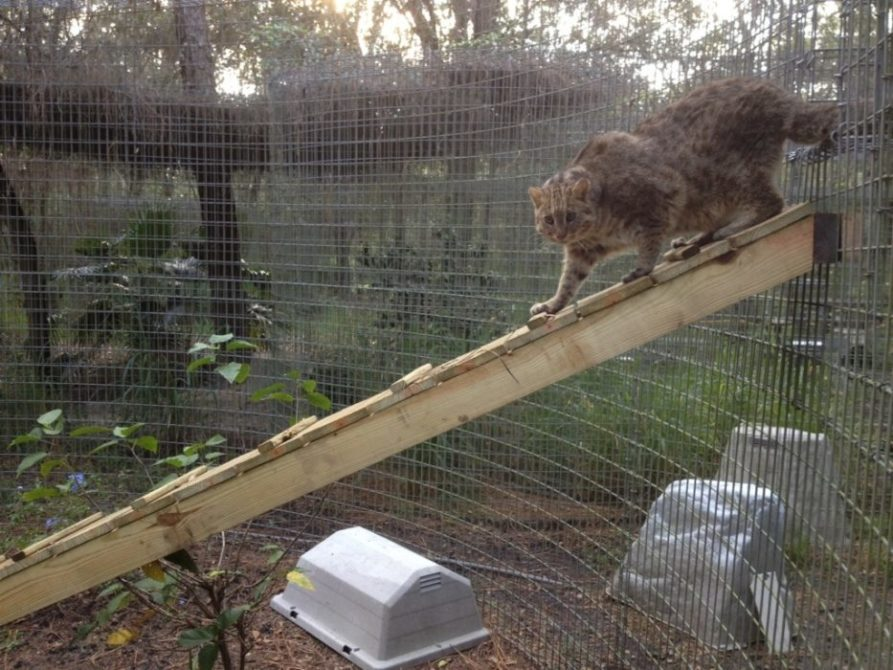 Trick E Leopard Cat gets a two sided Cat-a-Tat joined by tunnel and ramps