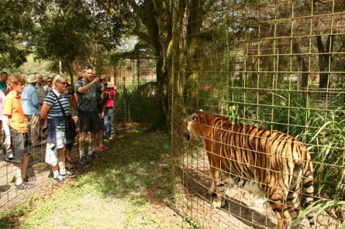 Day Tour at Big Cat Rescue