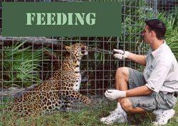Feeding Tour