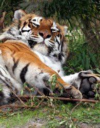 Photo Safari Tour