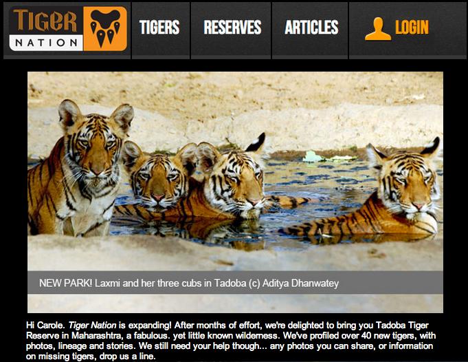 Tiger Nation Laxmi