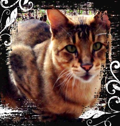 Today at Big Cat Rescue Dec 23 2012