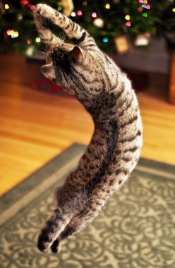 Cat Christmas by Samantha Decker