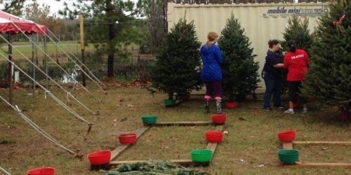 ChristmasTreeRoundup2012_0115