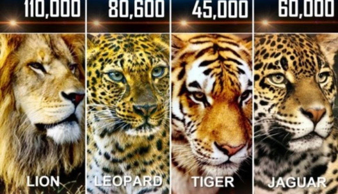 DeclineOfBigCats50Years