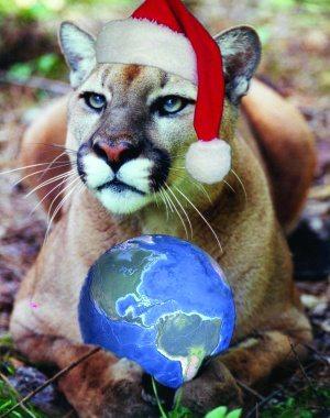 Santa Cat Hat Cougar