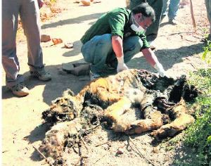 Tiger found dead in Ranthambore tiger reserve
