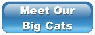 Meet Our Big Cats