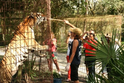 Keeper Tours at Big Cat Rescue
