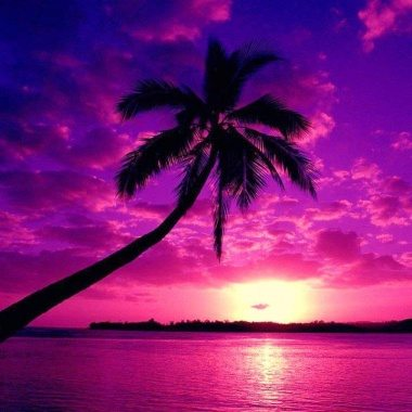 Florida Purple Sunset