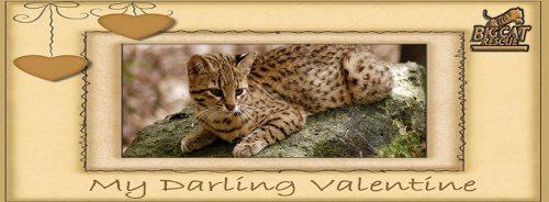 Valentine Darling Geoffroy Cat
