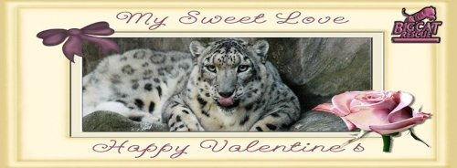 Valentines Day Snow Leopard
