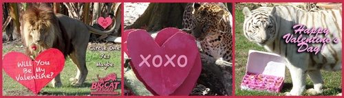 Valentines Day Banner 2013
