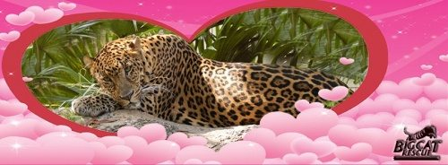 Valentines Day Leopard Pink Clouds