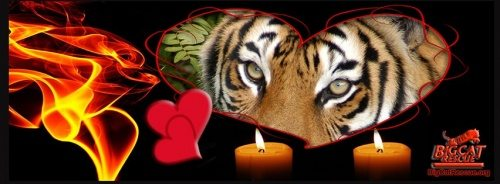 Valentines Day Tiger Memory Candles
