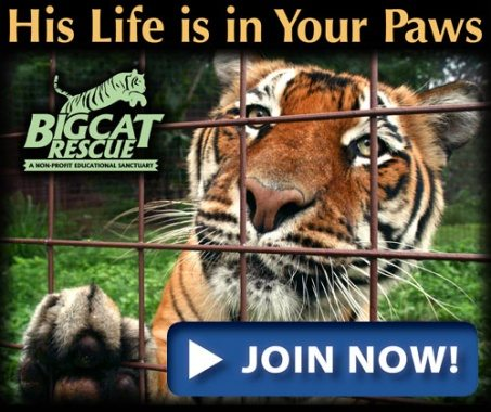 Join Big Cat Rescue