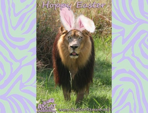 Hoppy Easter Lion