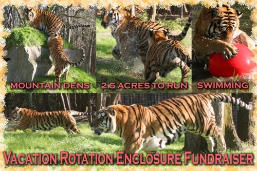 April_Vacation-Rotation-Fundraiser