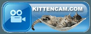 KittenCam
