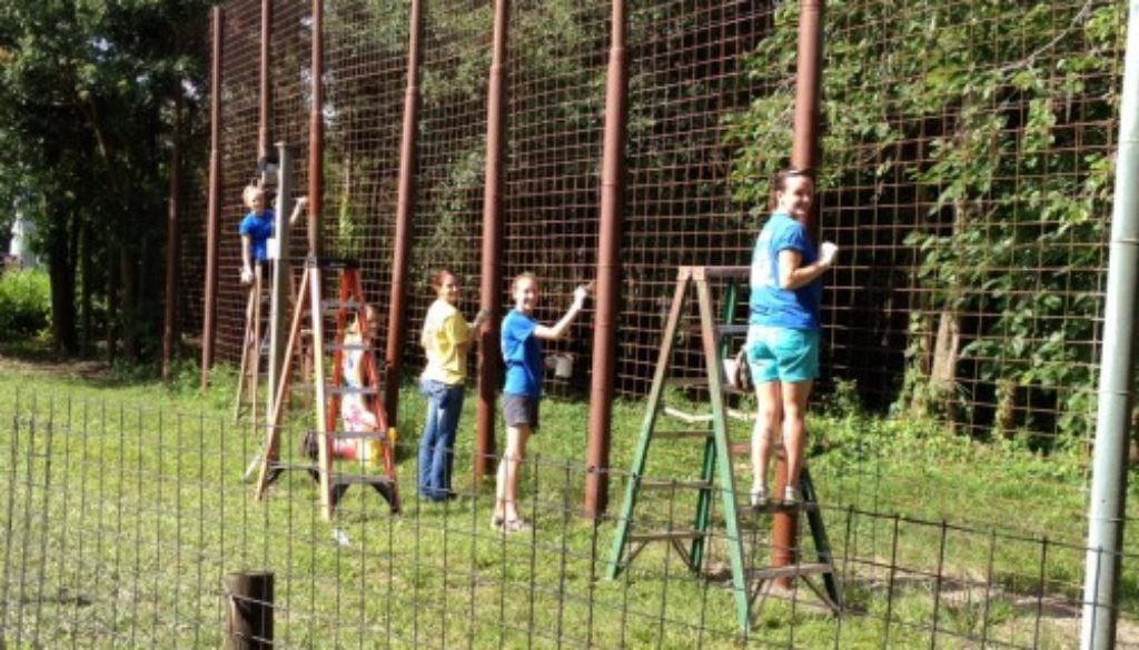 Interns-painting-tiger-cage