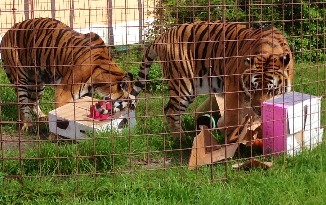 Today at Big Cat Rescue June 23 2013