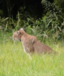 Bobcat-Wesley-Chapel_0794