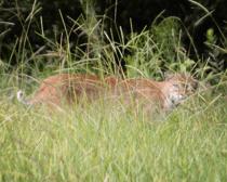 Bobcat-Wesley-Chapel_0797