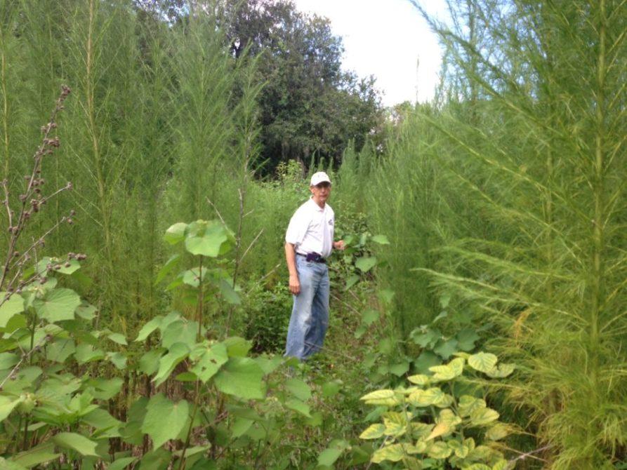 Howard-Baskin-In-the-weeds