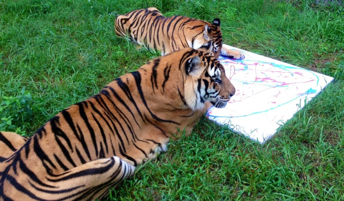 Today at Big Cat Rescue July 11 2013