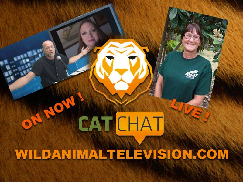 Cat Chat Aug 21 2013