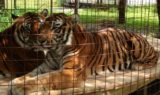 Tigers-Arthur-Andre-Aug-004