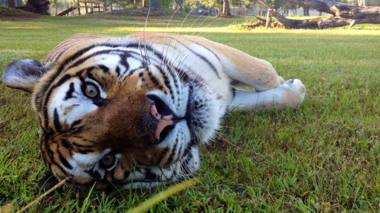 Sanctuary | Big Cat Rescue