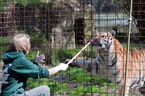 Operant Conditioning at Big Cat Rescue