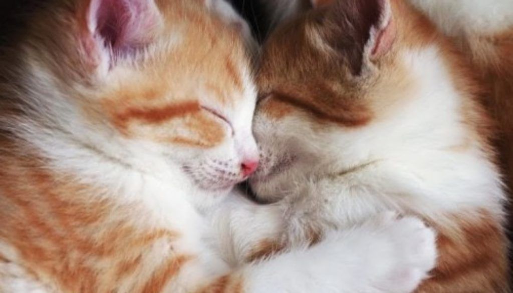 Kittens Cuddle