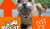 Reddit Vote Up Big Cat Rescue