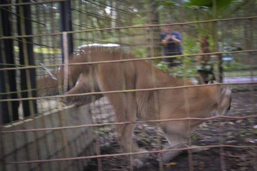 Reise-Cougar-Rescue418