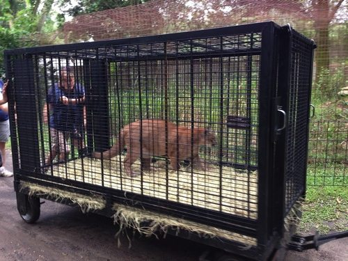 Reise-Cougar-Rescue_5103