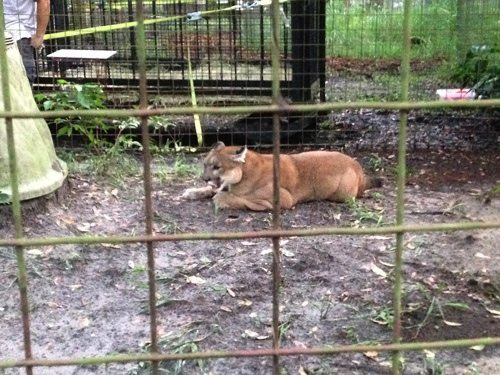Reise-Cougar-Rescue_5173