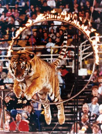 Hollywood bans circus