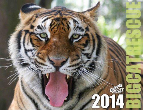 2014 Big Cat Calendar